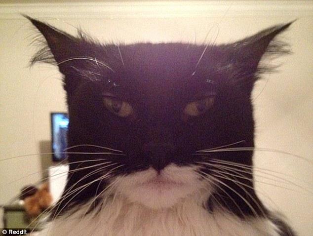 Cat-resembling-Batman.jpg